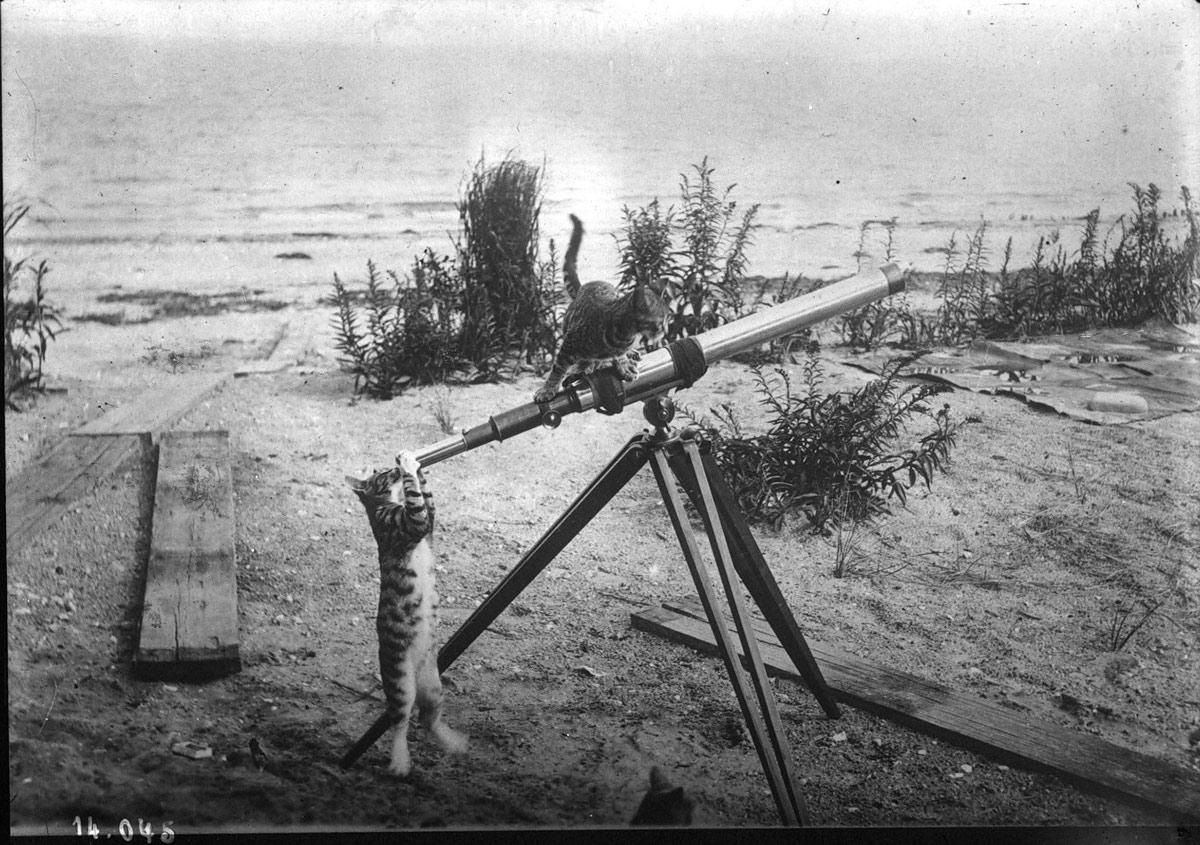 katzen-teleskop